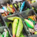 What to Consider When Choosing Your Fishing Bait
